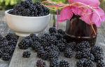 Варенье из садовой ежевики: варианты простых рецептов