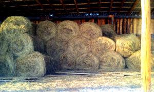 Сколько сена надо быку на зиму: основные отличия зимнего рациона