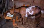 Необходимость витаминов для домашних коз