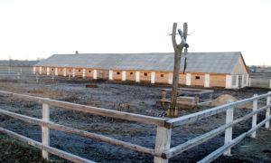 Как построить стойло для быков своими руками
