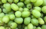 Виноград универсального сорта Августин