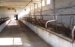 Помещение для содержания быков: площадь и другие характеристики