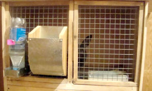 Кормушки для домашних кроликов