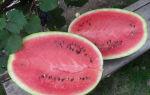 Арбуз сорта Атаман: особенности выращивания и ухода