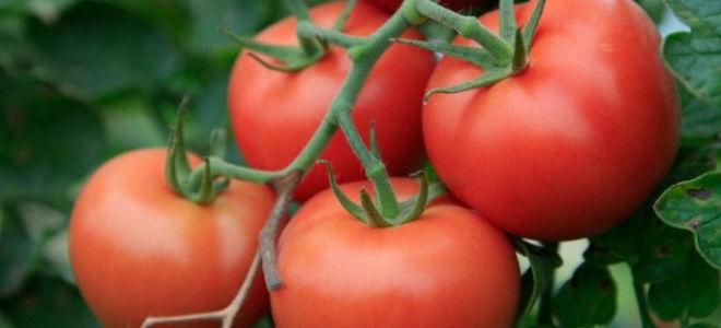 Томат тепличный высокоурожайный Евпатор
