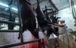 Как зарезать быка и правильно разделать тушу