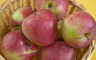 Яблоня морозоустойчивая Глостер