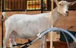 Доильный аппарат для быстрого обслуживания коз