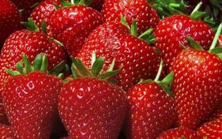 Клубника сорта хоней — растение со сладкими, ароматными плодами