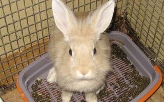 Понос — тревожный симптом проблем со здоровьем у кролика