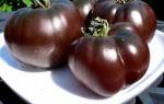 Томат сорта черный принц: особенности выращивания и ухода