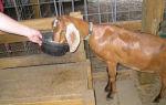 Обогащенный комбикорм для сельскохозяйственных коз
