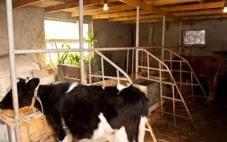 Сарай для коров: неизвестное об известном