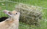 Сено для домашних кроликов