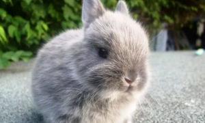 Карликовые декоративные кролики – общая характеристика вида, выбор и описание популярных пород, содержание и уход, приучение к лотку, а также вакцинация и основные болезни
