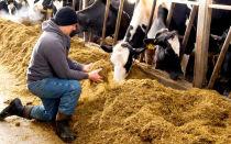 Откорм быков быстрым способом в домашних условиях