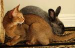 Мясо кролика и кошки: как отличить подмен