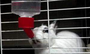 Поилки для домашних кроликов