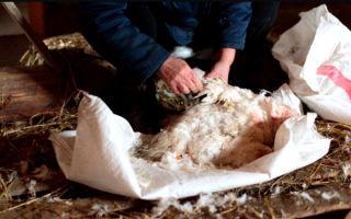 Как быстро ощипать гуся: способы для домашнего хозяйства