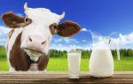 Сколько литров молока дает корова в сутки – сроки начала сбора, количество и причины понижения удоев, а также лучшие породы КРС