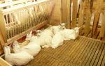 Сарай для содержания коз в домашних условиях