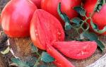 Томат крупноплодного урожайного сорта Вельможа