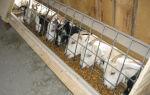 Кормушки для домашних коз
