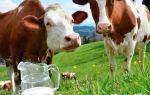 Сколько живут сельскохозяйственные коровы
