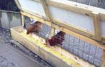 Кормушки для домашних кур