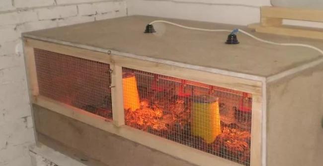 инкубатор сделанный своими руками