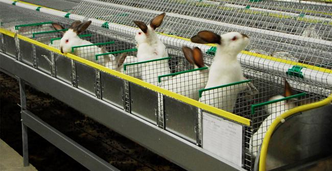 белые кролики в ячейках