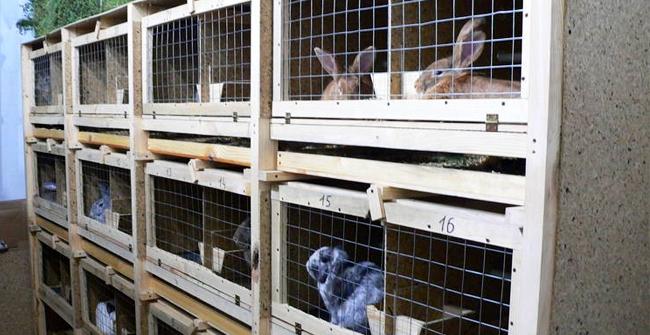кролики сидят в клетках