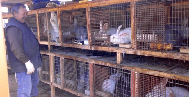 место для разведения кролей