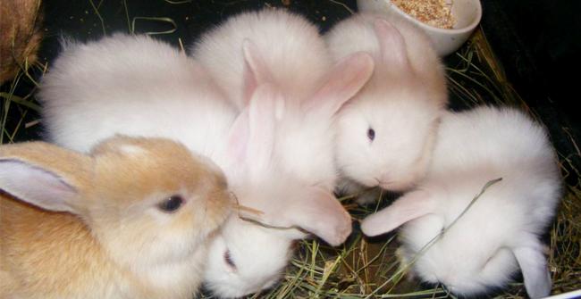 маленькие пушистые кролики