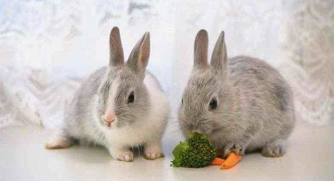 2 декоративных кролика