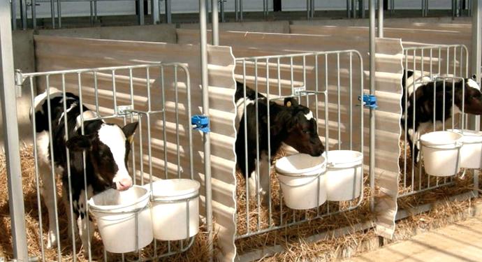 3 коровы в загоне