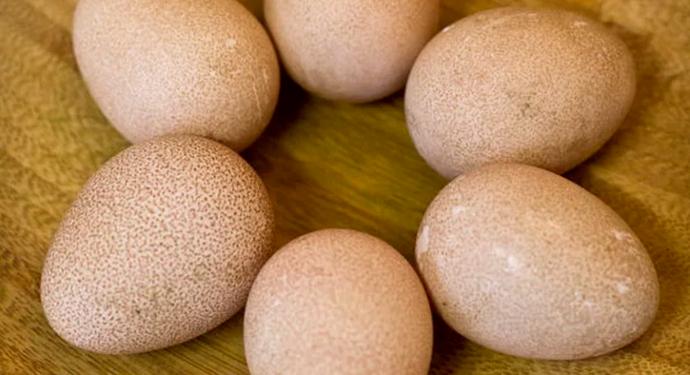 6 средних яиц цесарок