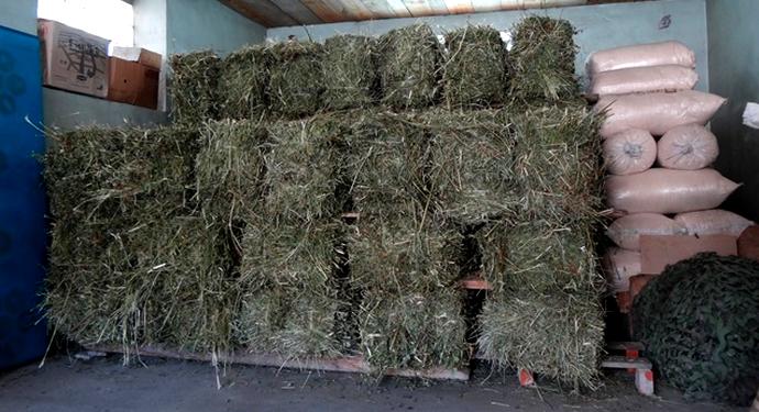 бруски сушеной травы