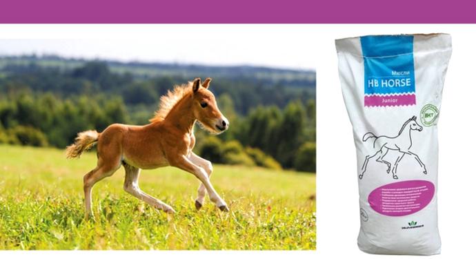 еда для лошадок