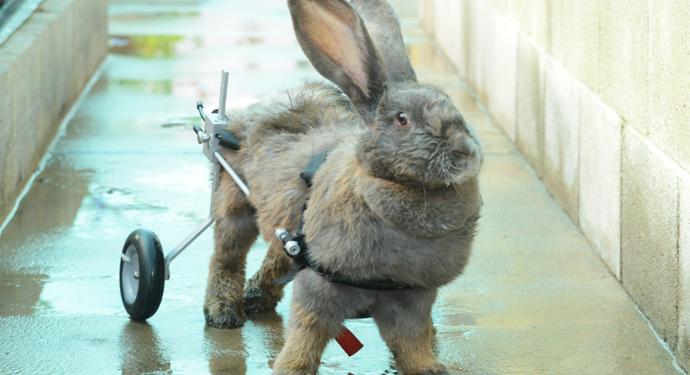 кролик инвалид