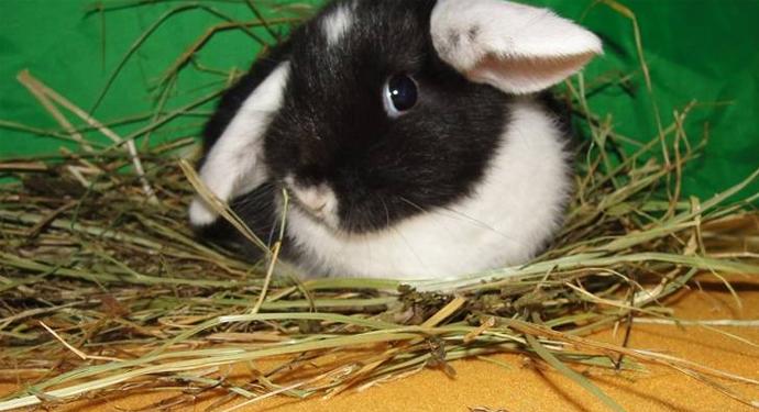 кролик после еды