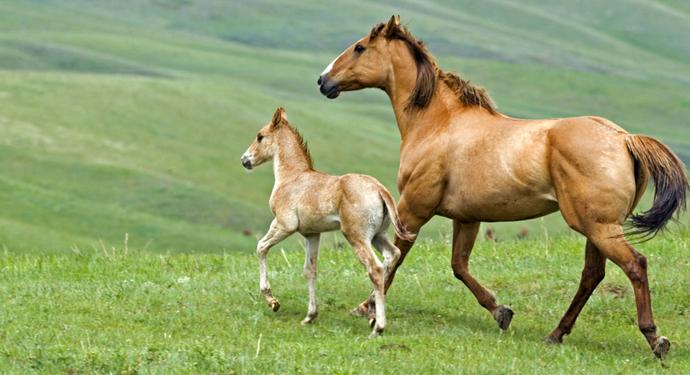 лошадь с жеребенком в поле