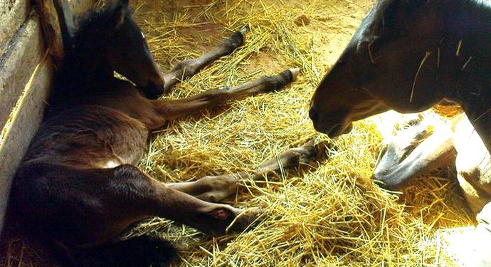 маленький конь на сене