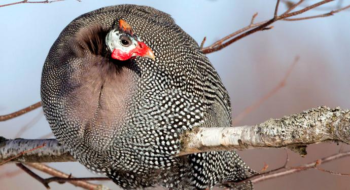птица тесарка сидит сидит на ветке