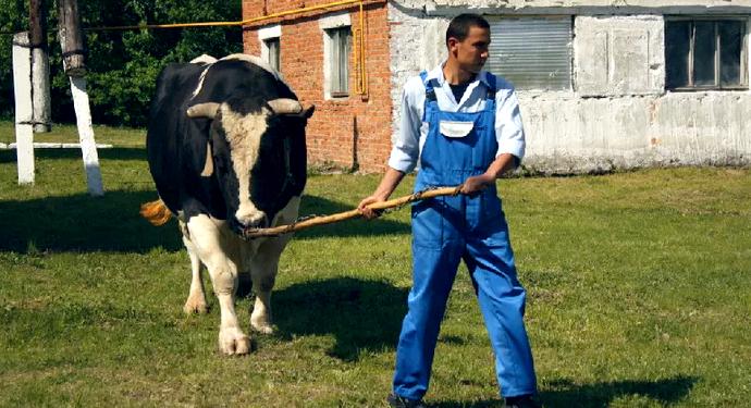 уход за быком
