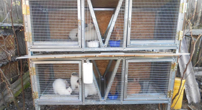 ухоженные клетки с кроликами