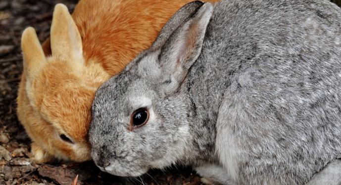 2 кролика