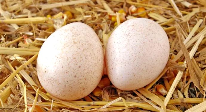 2 яйца индюшки