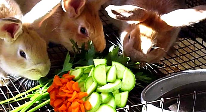 3 кролика кушают овощи