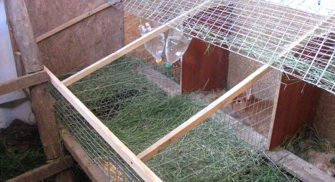 пустой волер для кроликов